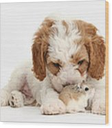 Cavapoo Puppy And Roborovski Hamster Wood Print