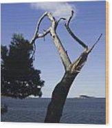 Cavtat Tree Wood Print