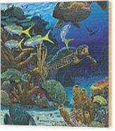 Cayman Turtles Re0010 Wood Print