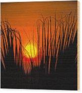 Cayo Grande Palm Tree Sunrise Wood Print