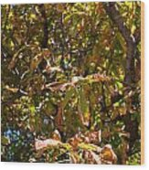 Cchestnut Tree In Autumn Wood Print