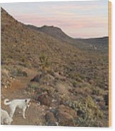 Ceaser, Mocha, And Chico In The Cerbat Mountains Wood Print