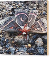 Cecropia Moth Blending In Wood Print