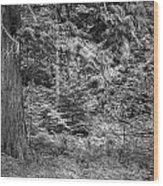 Cedar Along The Trail Of Cedars Glacier National Park Bw Wood Print