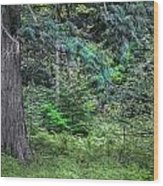 Cedar Along The Trail Of Cedars Glacier National Park  Wood Print