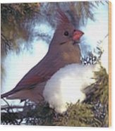Cedar Cardinal Wood Print