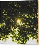 Cedar Filtered Sun Wood Print