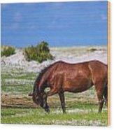 Cedar Island Wild Mustangs 59 Wood Print
