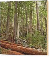 Cedar Logs At Garibaldi Wood Print