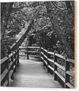 Cedar Pathway Wood Print