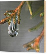 Cedar Tree Drips Wood Print