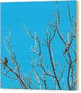 Cedar Wax Wings Wood Print