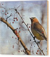 Cedar Waxwing And Berries Wood Print