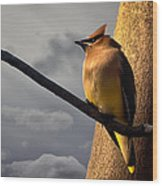 Cedar Waxwing Wood Print by Bob Orsillo