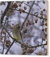 Cedar Waxwing Eating Berries 11 Wood Print