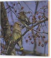 Cedar Waxwing Eating Berries 9 Wood Print