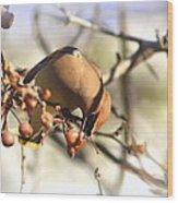 Cedar Waxwing - Img_0010-7x5 Wood Print