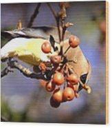 Cedar Waxwing - Img_9760-004 Wood Print