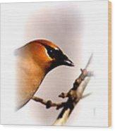 Cedar Waxwing - Img_9833-004 Wood Print