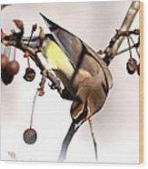 Cedar Waxwing - Img_9835-7x5 Wood Print