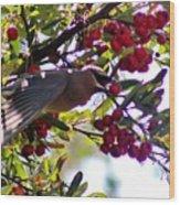 Cedar Waxwing In Flight 030515a Wood Print