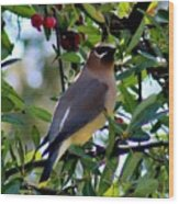 Cedar Waxwing In Tree 030515a Wood Print