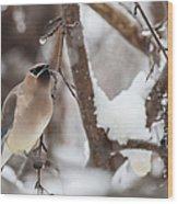 Cedar Waxwing In Winter Wood Print
