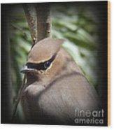 Cedar Waxwing Profile Wood Print