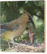 Cedar Waxwings Wood Print
