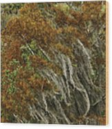 Cedars In The Fall Wood Print