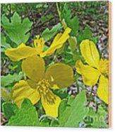 Celandine Poppy Or Wood Poppy - Stylophorum Diphyllum Wood Print
