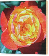 Celebration Rose Palm Springs Wood Print