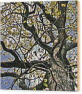 Cemetery Oak Wood Print