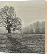 Cemetery Trees In The Fog E185 Wood Print