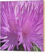 Centaurea From The Sweet Sultan Mix Wood Print