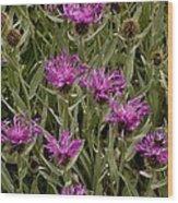 Centaurea Uniflora Ssp. Uniflora Wood Print