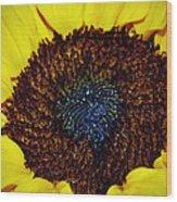 Center Of A Sunflower Wood Print