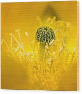 Center Of A Yellow Cactus Flower Wood Print