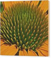 Center  Of Cone Flower Wood Print