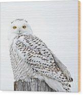 Centered Snowy Owl Wood Print