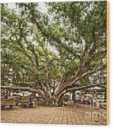 Central Court - Banyan Tree Park In Maui. Wood Print