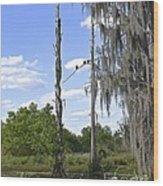 Central Florida Wetlands Wood Print