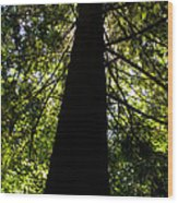 Central Park Trees 7 Wood Print