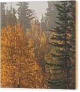 Central Park Yukon Wood Print