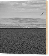 Central Washington, Usa. A Crop Duster Wood Print