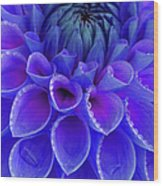 Centre Of Blue And Purple Dahlia Flower Wood Print