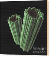 Centrioles Wood Print