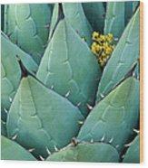 Century Plant And Tiny Blossom Wood Print
