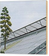 Century Plant Wood Print