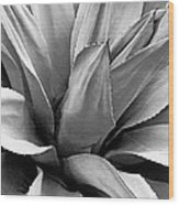 Century Plant I V Wood Print